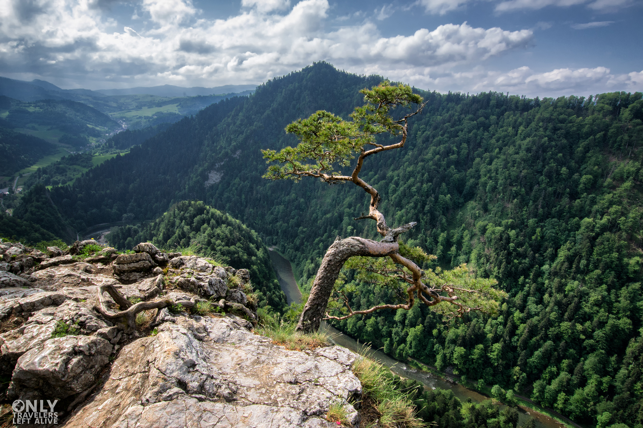 Sokolica only travelers left alive